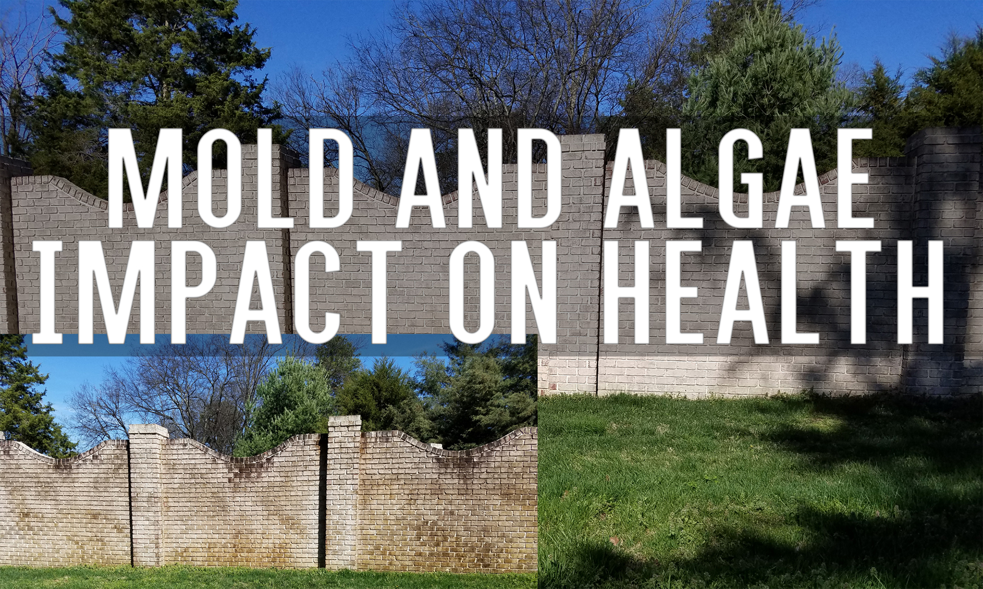 Mold And Algae On Your Vinyl Siding Deck Fence Pressure